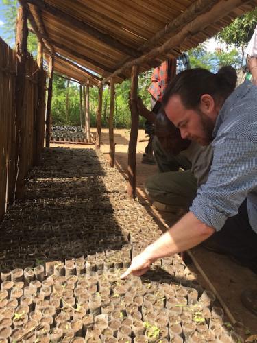 Nursery seed beds